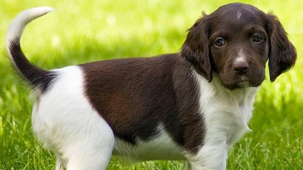 doggrass2938293