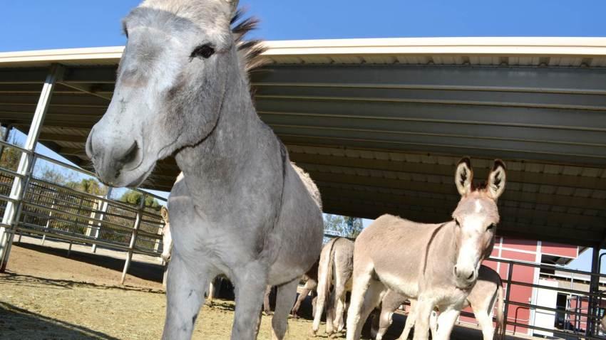 donkey-riverside-122315