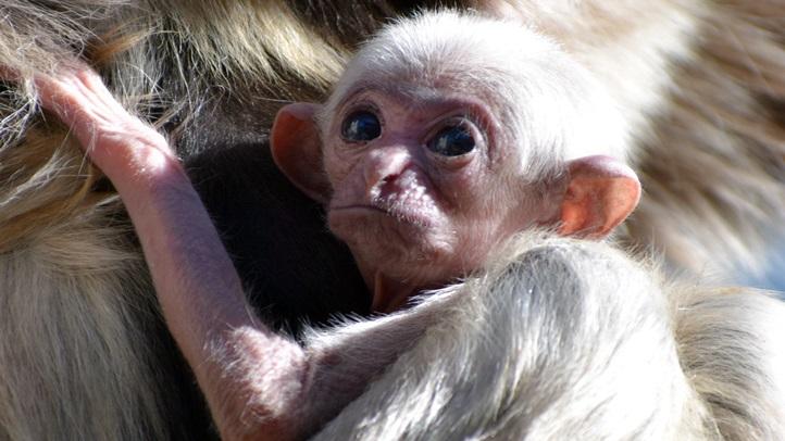 gibbonbabyname2017