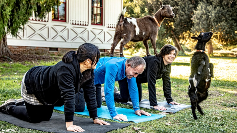 Yoga Fans to Goat for It at The Arboretum