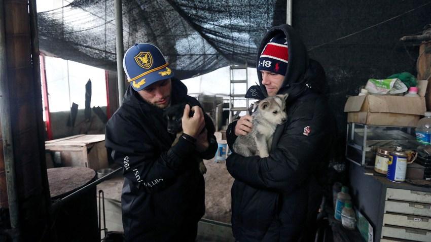 South Korea Kenworthy Korean Dog Rescue