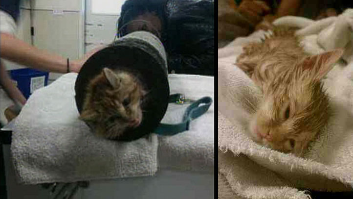 kitten-rescued-from-pipe