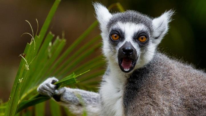 lemursdzoo_1