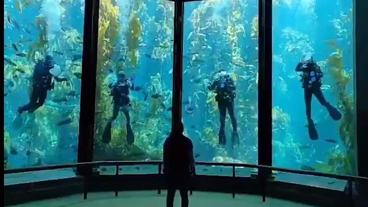 This Aquarium Cam Caught A Quartet Of