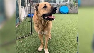 oscar-dog-pet-week-december-6-2019