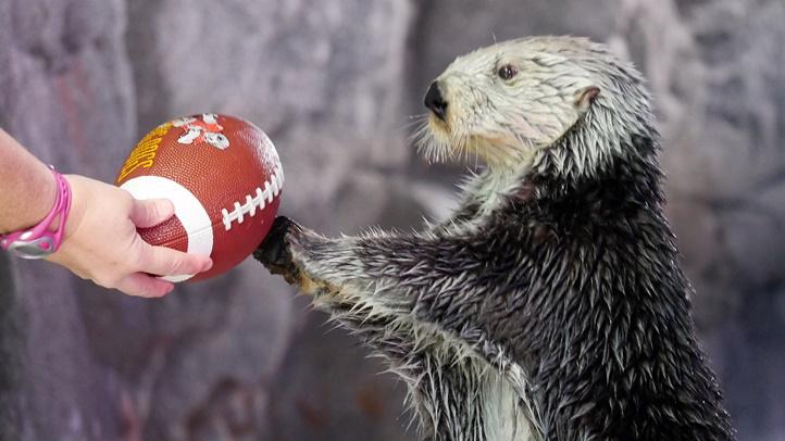 otter bowl 2323232