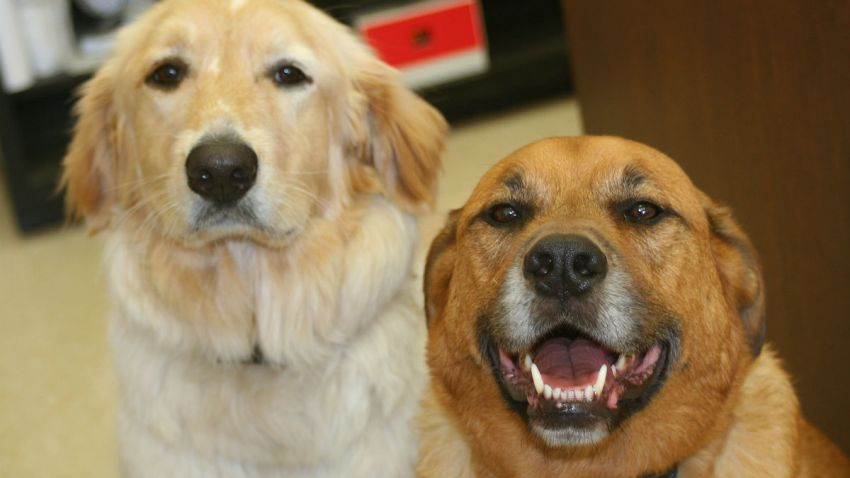 pet adoption cts