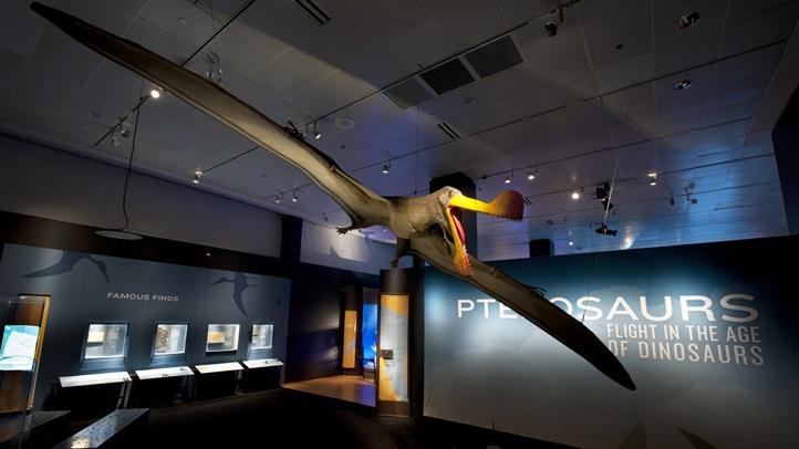 pterosaursnhm1345678