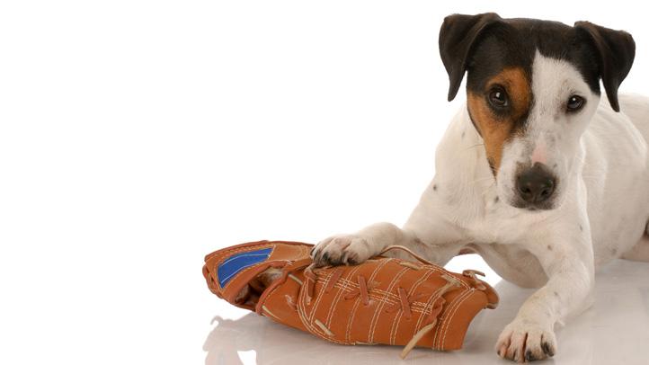 pups-shutterstock_38509813