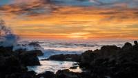 Monterey Bay Aquarium Has Beautiful Virtual Backgrounds