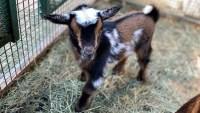 Underwood's Sweet Baby Animals Are Bringing Us Cheer
