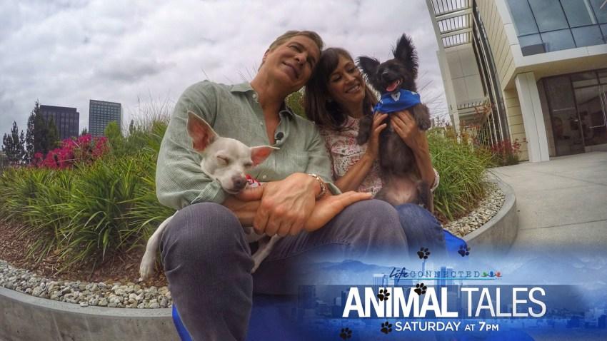web_Animal-Tales-2