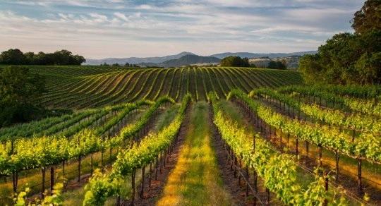 wineroadconcierge1