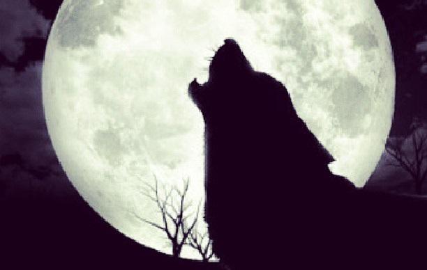 wolfdiscoverysantaana1