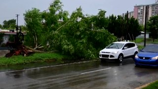 In this image made from video, a large tree toppled by tropical storm winds is seen in Alto Trujillo, Puerto Rico, Thursday, July 30, 2020.