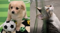 Adorable 'Critter Olympics' Will Aww-up Our August