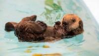 Swim Over to Monterey Bay Aquarium for Free Online Courses