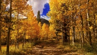 The First Mono County Fall Color Report Is Here