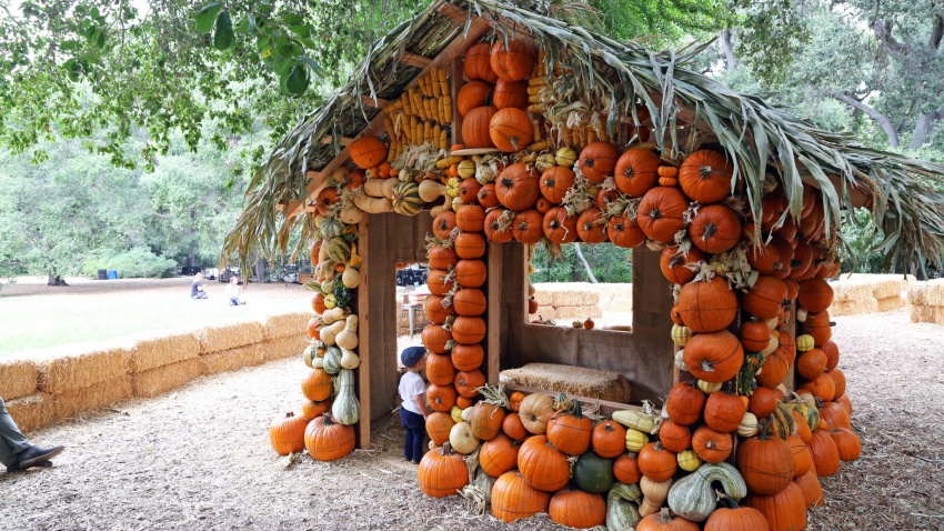 Descanso Gardens Halloween 2020 Halloween at Descanso' to Feature Fall Fun Sights – NBC Los Angeles