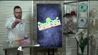Easy At-Home Science Project With Mr. Science