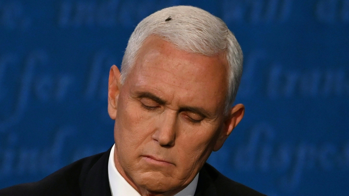 'The Flies Have It': Fly Lands on Pence's Hair During VP Debate 1