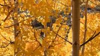 Seeking Fall Splendor in Yosemite and Madera County