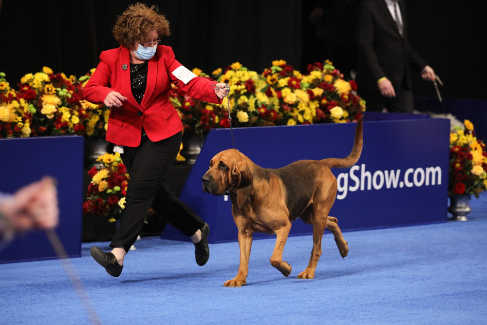'The National Dog Show': Here's What You Need to Know