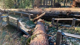 This photo provided by Yosemite National Park shows a boardwalk in the Mariposa Grove in Yosemite National Park was damaged by a fallen ponderosa pine during the Mono wind event on Tuesday, Jan. 19, 2021.