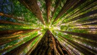Free and Virtual: Celebrate the Redwoods From Home