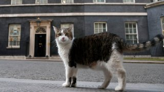In this Thursday, May 21, 2020, file photo, Larry, the official 10 Downing Street cat, walks outside 10 Downing Street before the nationwide Clap for Carers to recognize and support National Health Service (NHS) workers and carers fighting the coronavirus pandemic, in London. Monday, Feb. 15, 2021, marks the 10th anniversary of rescue cat Larry becoming Chief Mouser to the Cabinet Office in a bid to deal with a rat problem at 10 Downing Street.