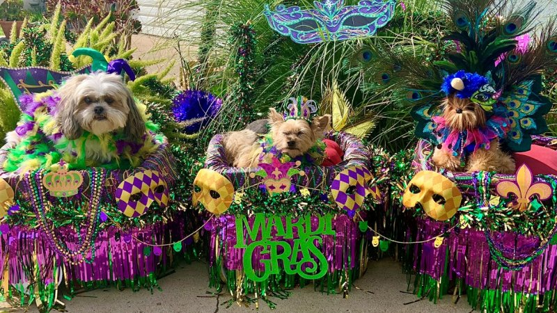 Pups Paraded From Home at This Virtual Doggie Gras