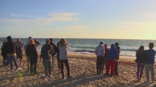 People gather at Dockweiler State Beach after a whale washed ashore.