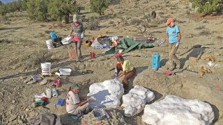 In this photo provided by the Bureau of Land Management, researchers prepare fossils to be airlifted from the Rainbows and Unicorns Quarry on Grand Staircase-Escalante National Monument to the Paria River District paleontology lab in Kanab, Utah, on Sept. 4, 2018. Ferocious tyrannosaur dinosaurs may not have been solitary predators as long envisioned, but more like social carnivores such as wolves, new research unveiled Monday, April 19, 2021, found.
