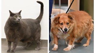 Left: Sebastian the cat. Right: Nalani the dog.