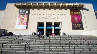 Los Angeles County Museum of Natural History, Exposition Park, Los Angeles.