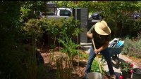 Woman Leads Charge in Growing Edible Gardens in Venice