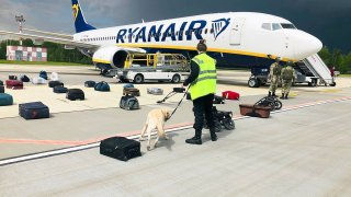 Security use a sniffer dog to check the luggage of passengers on the Ryanair plane