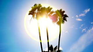 Palm trees are silhouetted against the sun