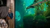 Reservations Are Opening for Monterey Bay Aquarium