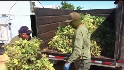 Marijuana Growth Operations in the High Desert
