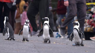 """This image released by Netflix shows a scene from the eight-part series """"Penguin Town."""""""