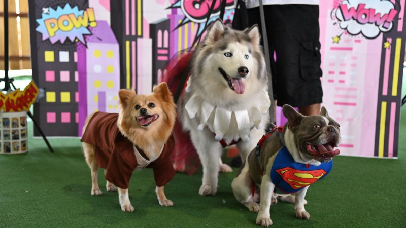 Canines Became Superheroes for This 'Cosplay for a Cause'