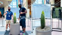 You Can See This New Corpse Flower for Free
