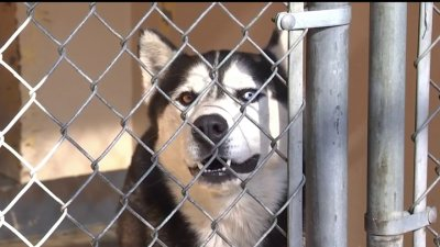 Dozens of Pets Find Fur-Ever Homes at Inland Valley Humane Society