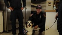 Therapy Dogs Provide Comfort for Firefighters
