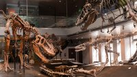 Claws for Celebration: SoCal's Beloved Dino Hall Turns 10