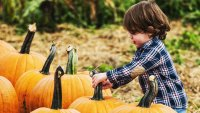 Pumpkin Patches Are Starting to Sprout Around SoCal