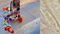 Beloved Puppets Put Their Handprints in Local Cement