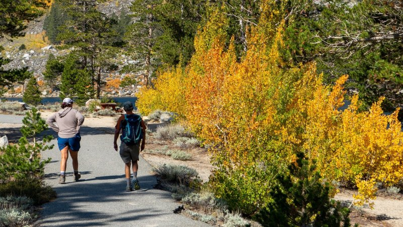 Leaf Peepers, It's Go Time Around Mammoth Lakes