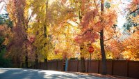 Nevada City's Fall Colors Are Pure Gold (Country)